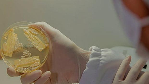 Candida auris: Labchecap inicia pesquisas com CDC dos Estados Unidos